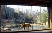 ^Big Cat Exhibit