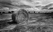 land and farming