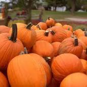 Pumpkin-fest 2016