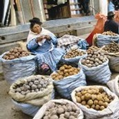 Potatoes being sold.