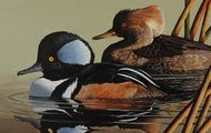 The Waterfowls