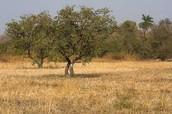 Grassland's Climate