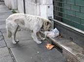 Giving Food To Hobo Dogs
