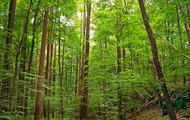 A Diciduous Forest