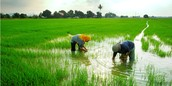 Malaysia's Agriculture