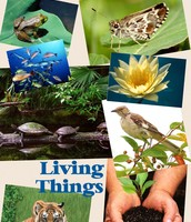 Students created a collage of living things.