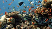 Coral Reef Ecosystem 2