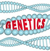 Science- Genetics and Heredity