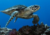 What is being done to protect the turtles?