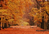 Autum by Henry Wadsworth Longfellow