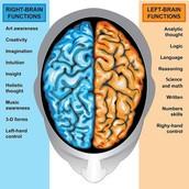 Brain hemisphere test