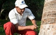 Tim Taps A Tree