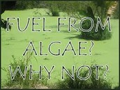 Algae is a great liquid biofuel.