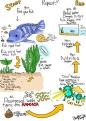 What is the Nitrogen Cycle?