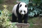 A little bit about Pandas