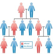 Heredity Studies and Information
