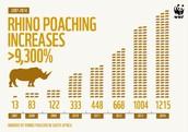 Poaching Rates
