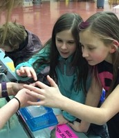 Two 5th graders play with a hissing cockroach at the Stream Academy preview day.