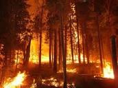 Wild fires.