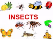 Animals/Insects