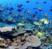 Toliara Coral Reef