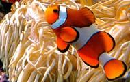 Underwater Photo Taking