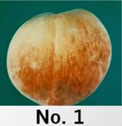 Peach No.1