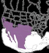 Roadrunner map range