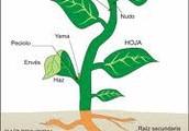 why do plants make food