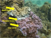 Death of Coral in Action