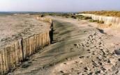 Fences Dunes