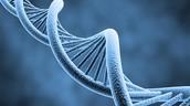 Inherited Genes
