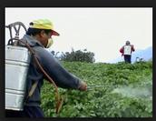 Pesticidias