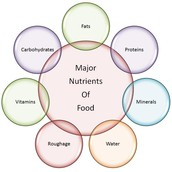 6 Classes Of Nutrition: