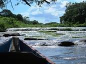 The Suriname River