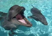 Our Dolphins