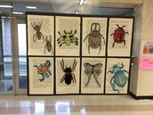 Insect book drawings