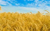 Be a Part of America's Breadbasket