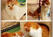 Come to the Cal Poly Cat Shelter