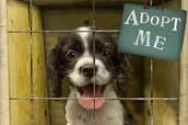 Animal Safe Haven