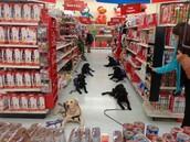 Chez Walmart - dans l'allée des jouets