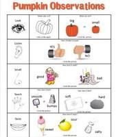 Pumpkin Observation Sheet