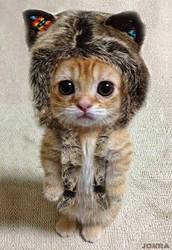Here is a cute vidieo to watch!. enjoy!