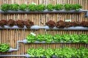 6 different plants you can grow with hydroponics