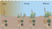 The Benefits of Seagrass