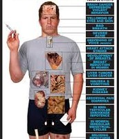 the parts  of the body that effected by steroids