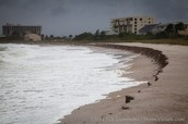 What wildlife is most effected by beach erosion?