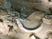 Bull Mammoth's Bones