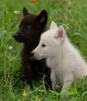 pups of the love