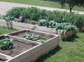 Gage Garden